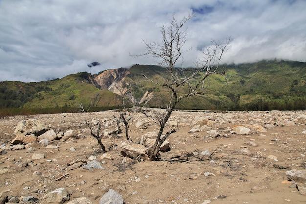 Przyroda doliny wamena, papua, indonezja