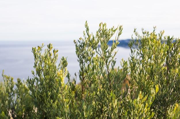 Przyroda i koncepcja wiosna zielone krzewy roślin na tle morza