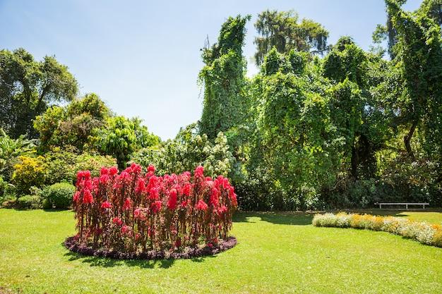 Przyroda i rośliny w tropikalnym parku na sri lance. krajobraz cejlonu