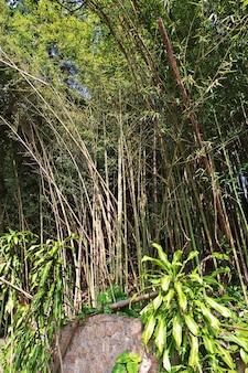 Przyroda na górze głowa cukru w rio de janeiro w brazylii