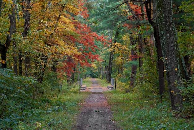 Przyroda w jesienny dzień