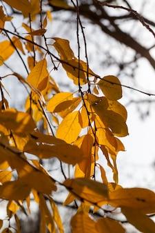 Przyroda w okresie jesiennym, specyfika i cechy drzew o zmiennym ulistnieniu