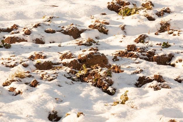 Przyroda w okresie po niewielkich opadach śniegu.