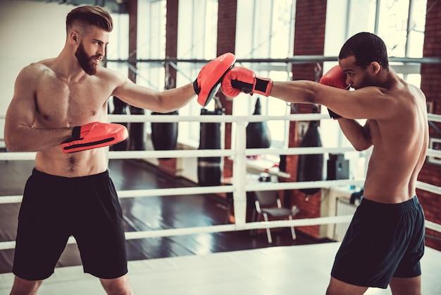 Przystojni młodzi bokserzy