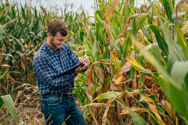 Przystojny agronom trzyma tablet dotykowy na polu kukurydzy i bada plony przed zbiorem