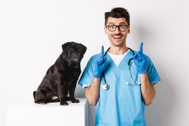 Przystojny młody lekarz w klinice weterynaryjnej wskazujący palec w górę i uśmiechnięty pod wrażeniem, stojący w pobliżu uroczego czarnego mopsa, białe tło