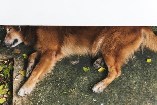 Psi dosypianie relaksuje ślicznego pojęcie
