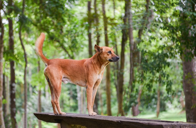 Psia parkowa pozycja na drewna i natury zielonym drzewnym lesie
