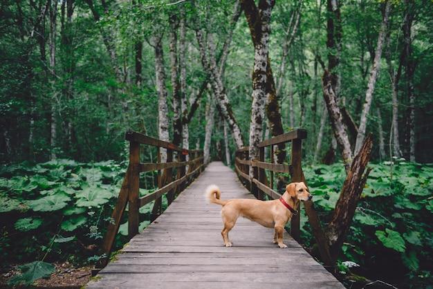 Psia pozycja na drewnianym lasowym śladzie