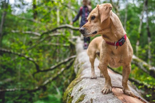 Psia pozycja na drzewnej beli