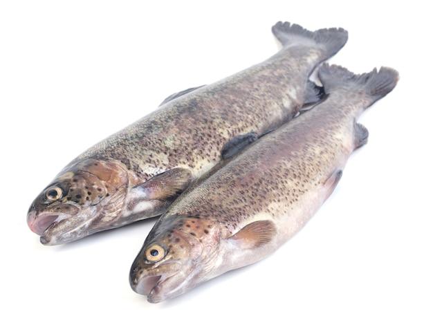 Pstrąg rybny