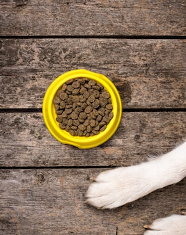 Psy łapy i miska suchego odżywiania. koncepcja karmy dla zwierząt domowych