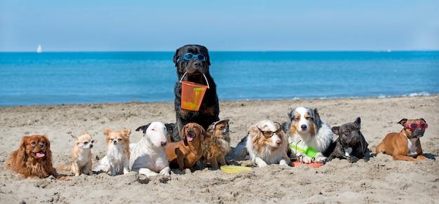 Psy na plaży