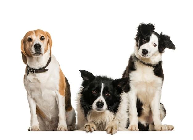 Psy siedzą w rzędzie