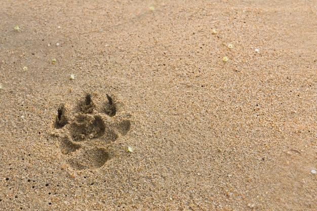 Psy ślady stóp
