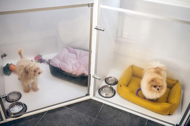 Psy. śliczny puszysty piesek w hotelu dla zwierząt czeka na właściciela