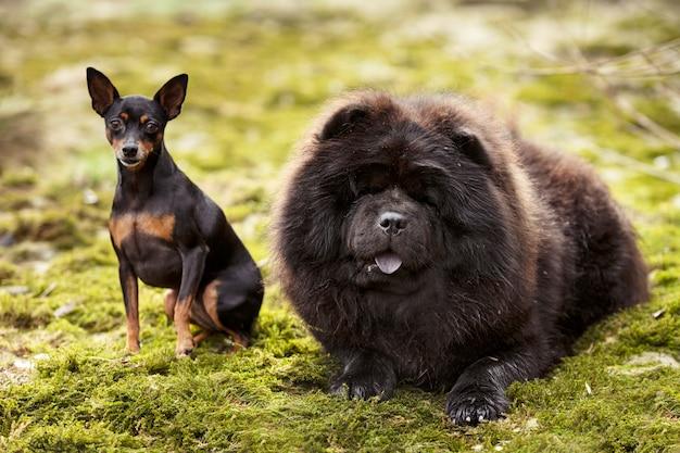 Psy w przyrodzie