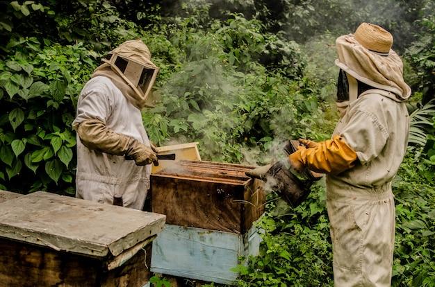 Pszczelarstwo w dżungli gwatemali