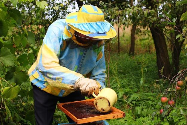 Pszczelarz karmi pszczoły syropem cukrowym
