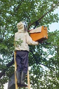 Pszczelarz na drabinie wkłada ul z drzewa do pudełka