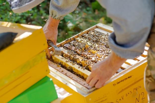 Pszczelarz nadzoruje produkcję miodu u pszczoły. widoczne drewniane ramki pszczół.