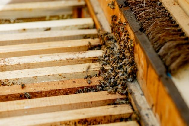 Pszczelarz opiekuje się plastrami miodu. apiarist pokazuje pusty plaster miodu. pszczelarz opiekuje się pszczołami i plastrami miodu. puste plastry miodu pszczeli