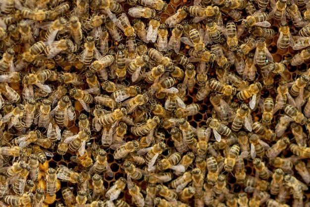 Pszczelarz opiekuje się plastrami miodu. apiarist pokazuje pusty plaster miodu. pszczelarz opiekuje się pszczołami i plastrami miodu