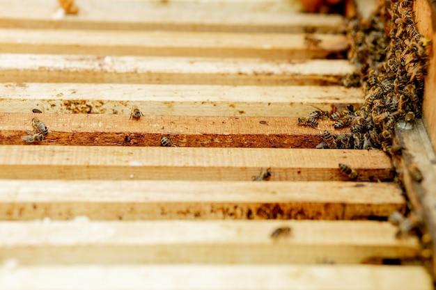 Pszczelarz opiekuje się plastrami miodu. pszczelarz pokazuje pusty plaster miodu. pszczelarz opiekuje się pszczołami i plastrami miodu. puste plastry miodu.