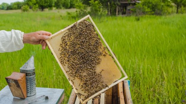 Pszczelarz pokazujący plaster miodu w ramce. pszczelarz w pracy. ramki ula pszczół. pszczelarstwo