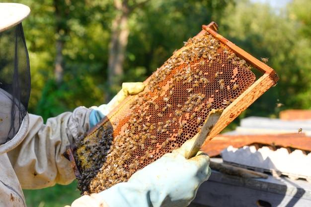Pszczelarz pracuje przy pszczołach i ulach na pasiece.