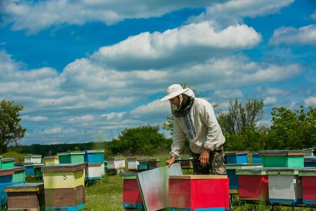 Pszczelarz pracuje z pszczołami i ulami na pasiece. pszczelarz na pasiece.