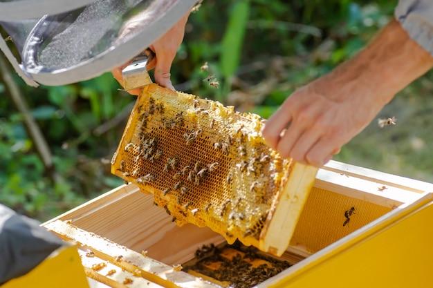 Pszczelarz pracuje z pszczołami i ulami na pasiece