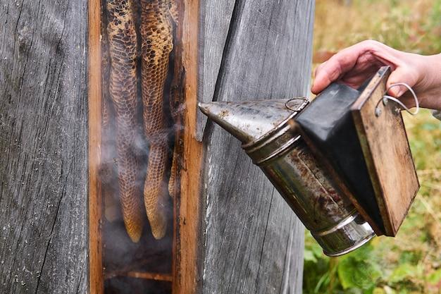 Pszczelarz pracuje z ulem o tradycyjnym kształcie - guma pszczela - za pomocą wędzarni