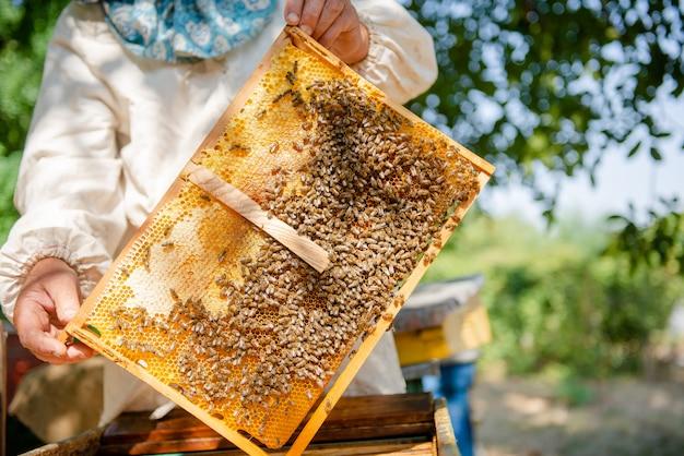 Pszczelarz sprawdza ul. patrzy na pszczoły na słońcu.