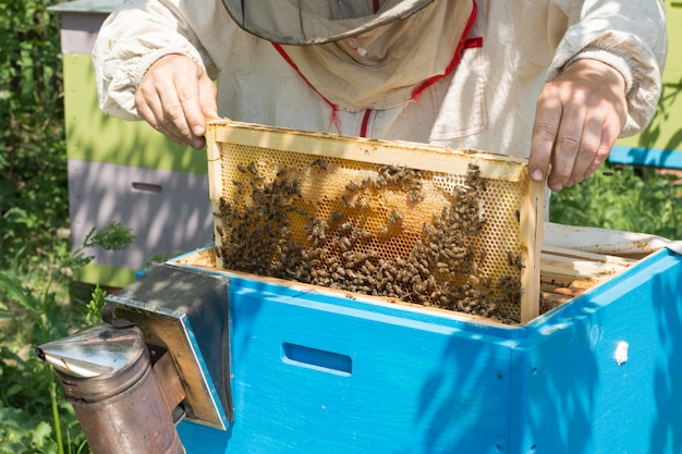 Pszczelarz sprawdzający ul
