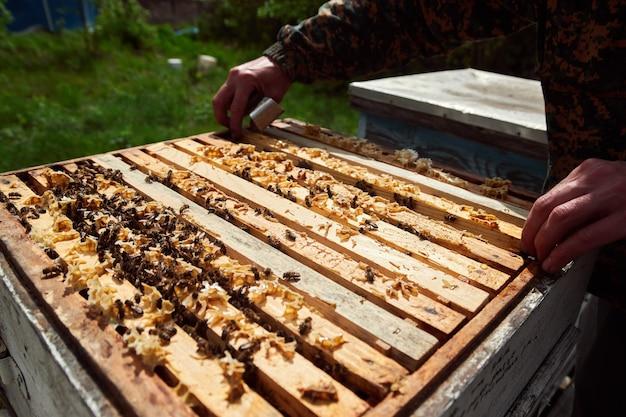Pszczelarz trzymając ramę plastra miodu z pszczołami. pszczelarz w ochronnej odzieży roboczej kontrolujący ramę plastra miodu w pasiece