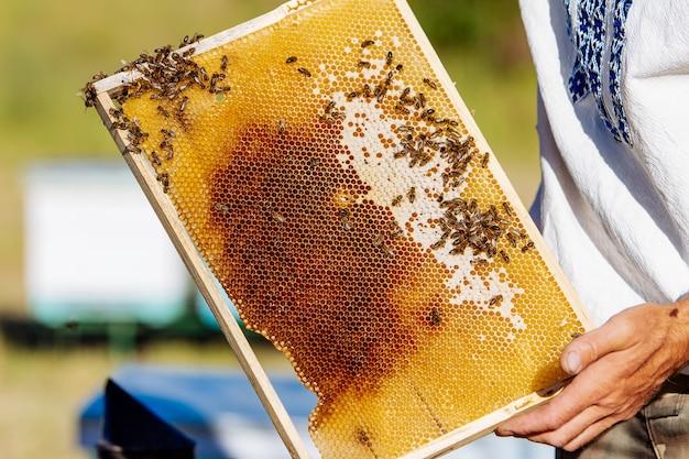 Pszczelarz trzymający plaster miodu z pszczołami.