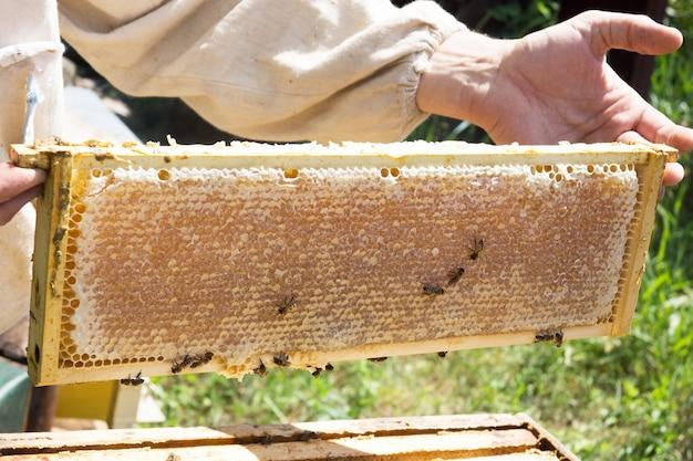 Pszczelarz trzymający ramkę z komórkami. rolniczy