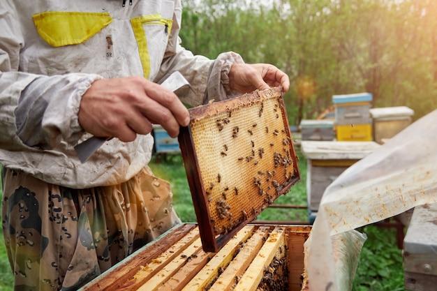 Pszczelarz trzymający ramkę z plastrami miodu i pszczołami. inspekcja ula. sprawdzanie ula z pszczołami.