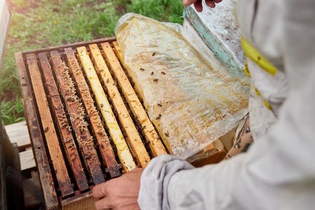 Pszczelarz trzymający ramkę z plastrami miodu i pszczołami. inspekcja ula