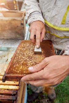Pszczelarz trzymający ramkę z plastrami miodu i pszczołami. wosk uszczelniony pszczółką z miodem, usuwanie wosku