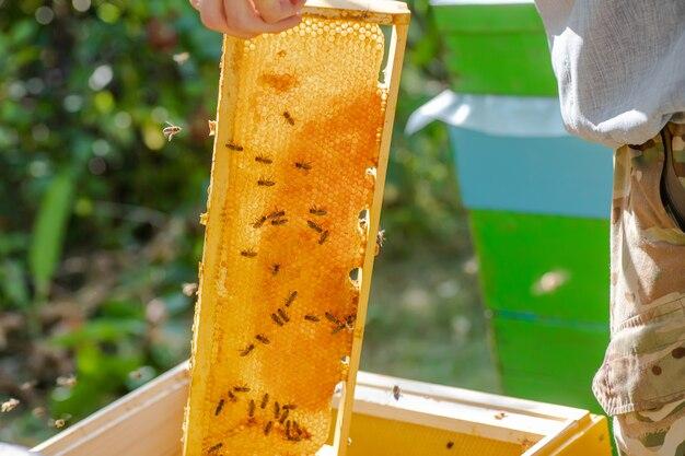 Pszczelarz umieszcza ramkę w ulu