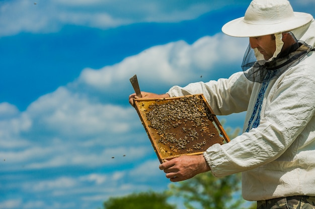 Pszczelarz uważa pszczoły w plastrach miodu. ręce pszczelarza. ramy ula. pracujące pszczoły na strukturze plastra miodu