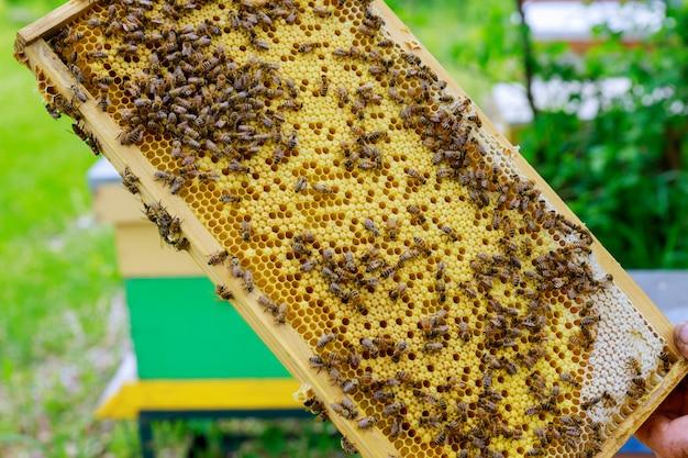 Pszczelarz w ładny słoneczny dzień sprawdza w locie kolonię pszczół w pobliżu ula