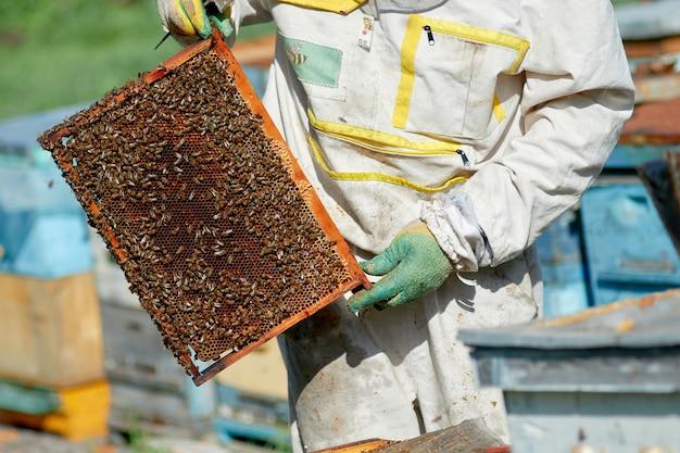 Pszczelarz w pasiece sprawdza ule z pszczołami