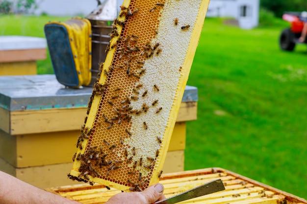 Pszczelarz w piękny słoneczny dzień sprawdza w locie kolonię pszczół w pobliżu ula