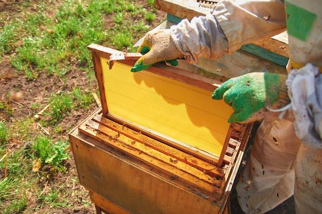 Pszczelarz w stroju pszczelarza i rękawiczkach obsługuje ule z pszczołami, ustawia nową ramkę z plastrami miodu, trzyma pustą ramkę z plastrami miodu