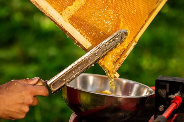 Pszczelarz wycina wosk z ramy o strukturze plastra miodu specjalnym nożem elektrycznym