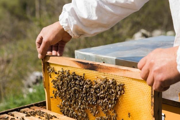 Pszczelarz wydobywający miód