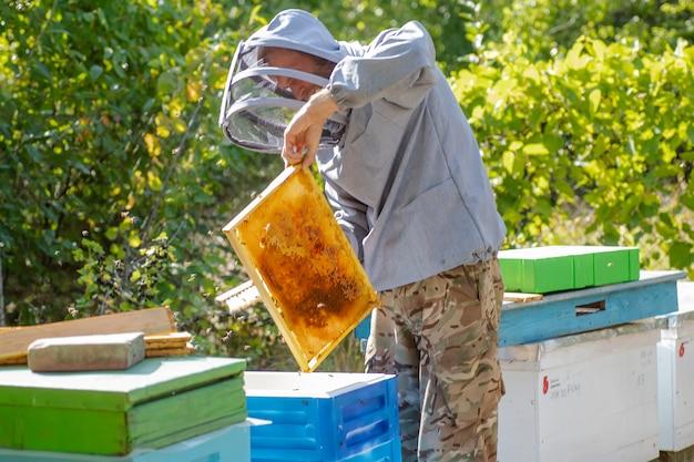 Pszczelarz zmiata pszczoły z klatki w pasiece